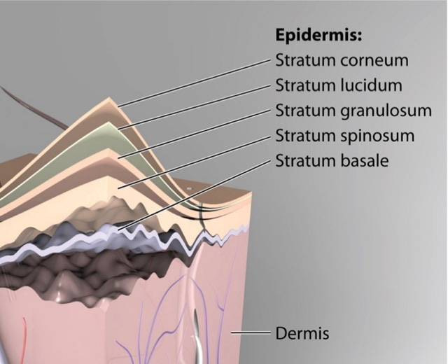 Empowering Skin's Natural Defenses
