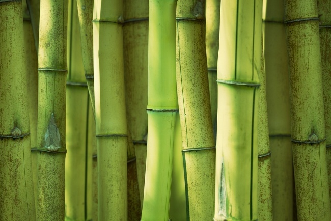 Steam showers help bend bamboo!