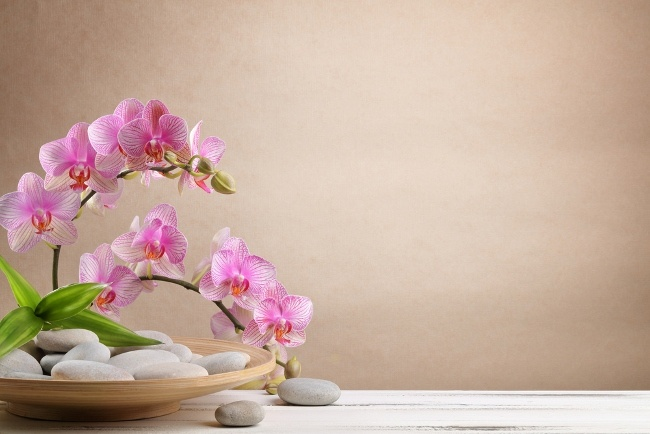 Orchids and tropical plants love steam showers