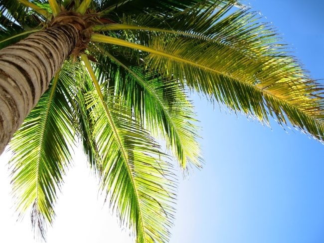 breathe in tropical combinations to clear chest, nose and sinuses