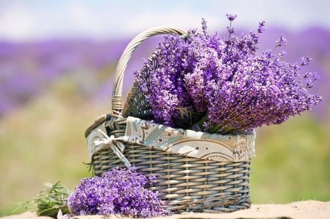 Lavendar evokes the beauty of spring blossoms